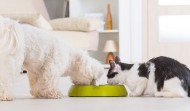 How to Find Non GMO Pet Food